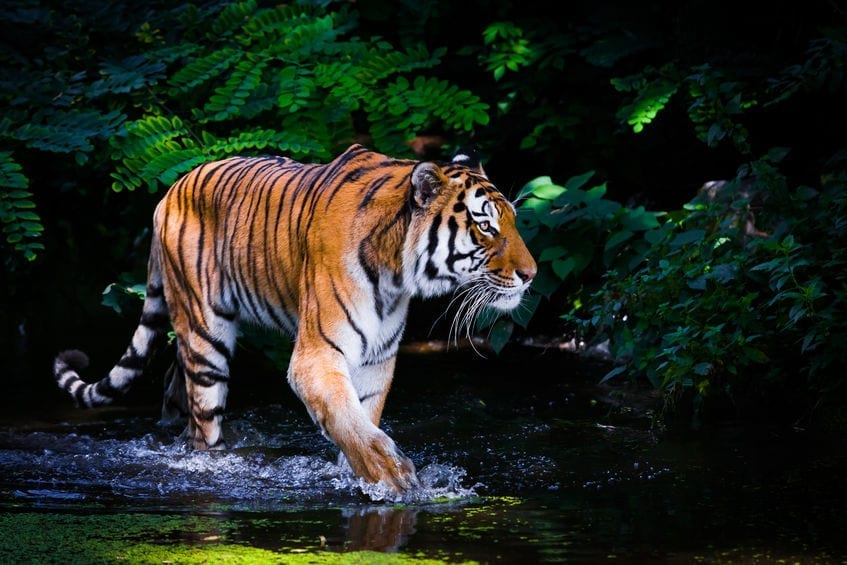 Startups are like riding a tiger
